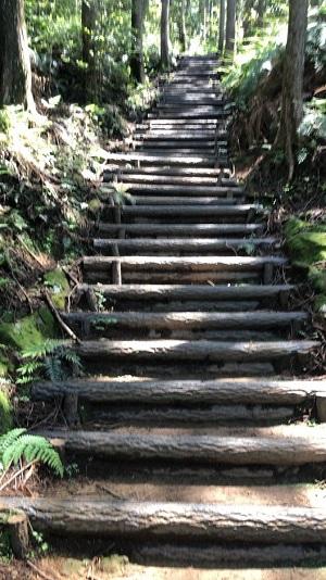 整備された階段.jpg